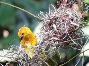 Bird making a nest